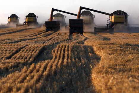Русия ще стане световен лидер в износа на пшеница