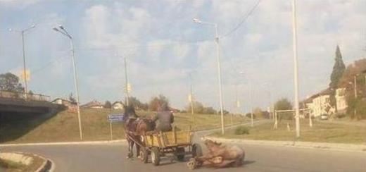 Фейсбук гърми: Гледката е ужасяваща! Роми влачат вързан за краката кон по асфалта из Перник (СНИМКА 18+)