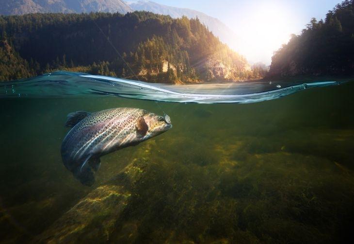 Ето как да изберете риба за Никулден, без да вредите на околната среда