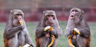 Как Новичок стана салата, а половината българи - маймуни