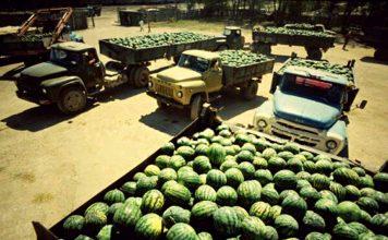 Истината за селското стопанство в НРБ. Когато банани нямаше, но пък имаше вкусни български дини...