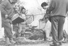 Когато в магазините нямаше месо, хората колеха прасета на село